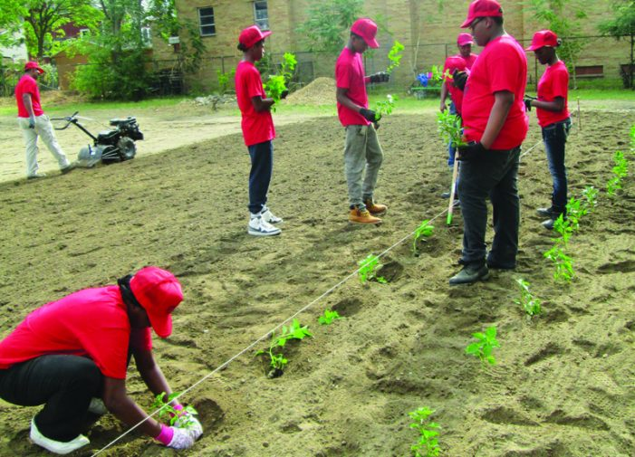 Fertile Ground: Ruth Mott Foundation grants are seeding hope