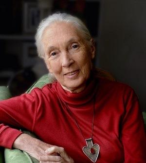 Conservationist Dr. Jane Goodall to speak at U-M Flint Critical Issues Forum Oct. 2