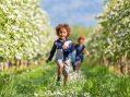 Amazing Orchards