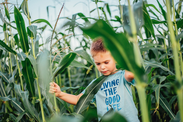 Fall Fun: Pumpkin patches, corn mazes and orchards